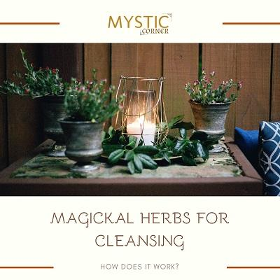 Magickal Herbs for Cleansing featured